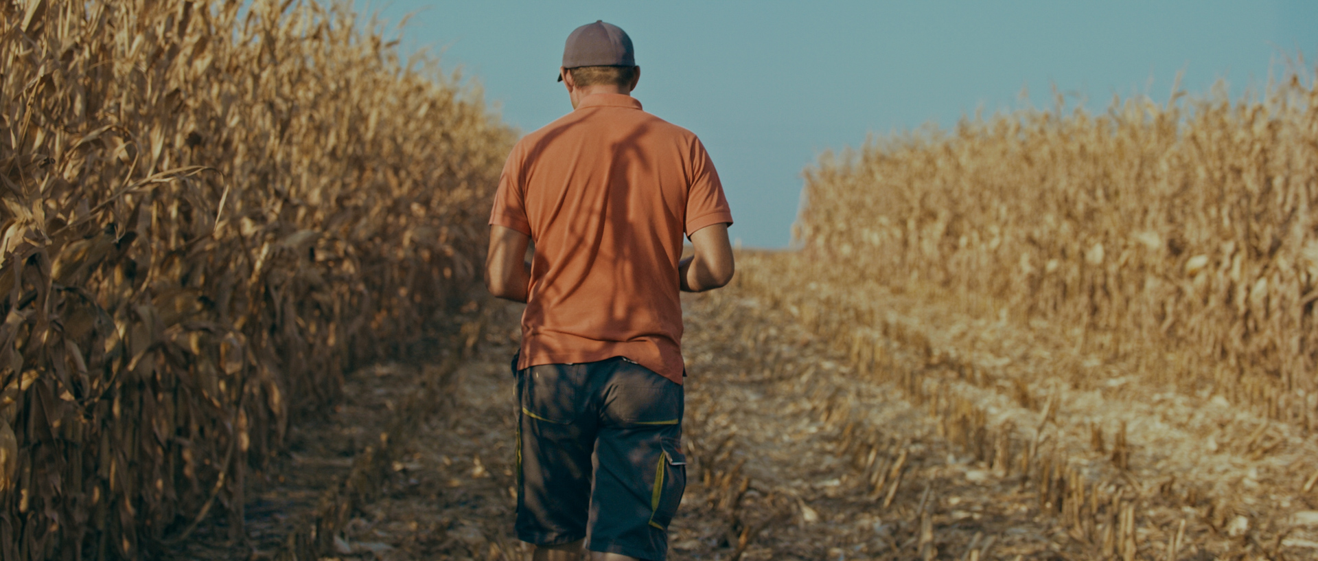 cosmin micu cornfield for mewi the farmers video by popotam productions video agency timisoara after color grading