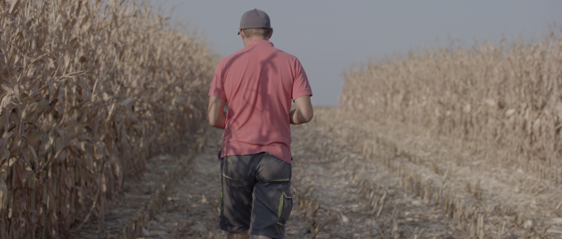cosmin micu cornfield for mewi the farmers video by popotam productions video agency timisoara before color grading